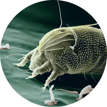 Dust mites allergies air purifier